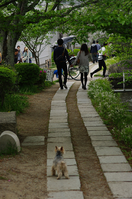 哲学の道をワンコと散歩..._f0152550_18584979.jpg