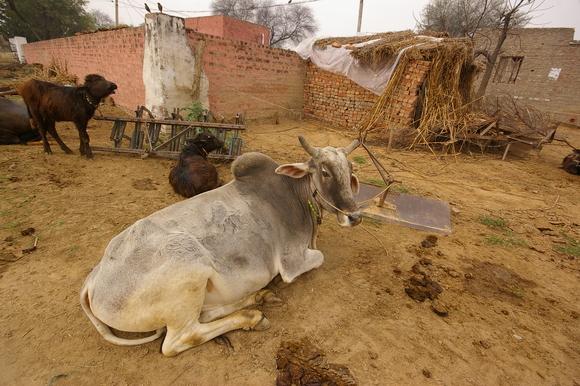 インド滞在記2011 その6: India 2011 Part6_a0186568_1314359.jpg