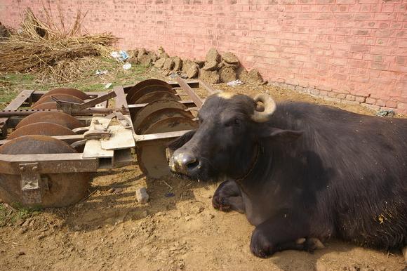 インド滞在記2011 その6: India 2011 Part6_a0186568_1321741.jpg
