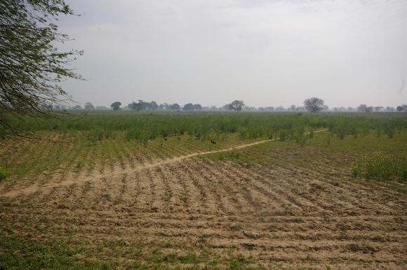 インド滞在記2011 その7: India 2011 Part7_a0186568_21323862.jpg