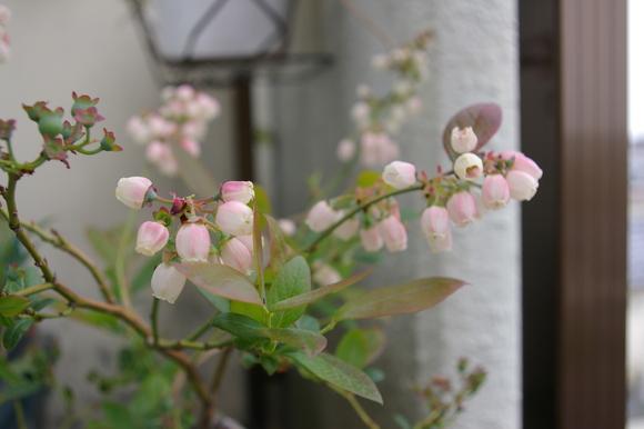ベランダ菜園 my small kitchen garden on balcony_a0186568_22254463.jpg