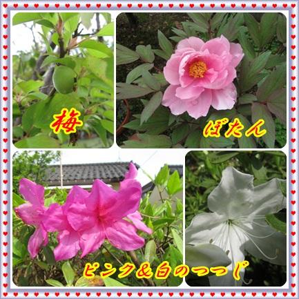 b0149071_2063135.jpg