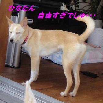 f0164479_311420.jpg