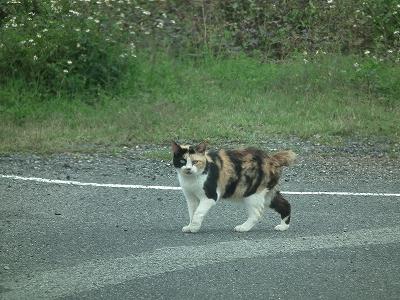 今日の猫_e0028387_1253873.jpg