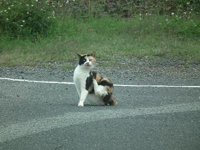 今日の猫_e0028387_1255498.jpg