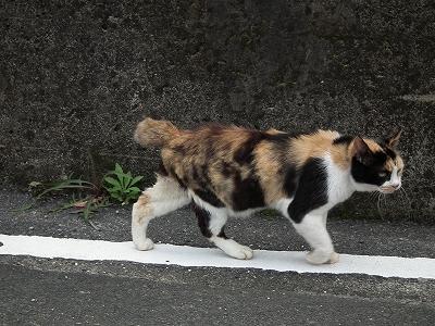 今日の猫_e0028387_1262558.jpg
