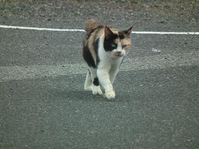 今日の猫_e0028387_126752.jpg