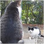 猫さん熱烈指導 猫の靴下