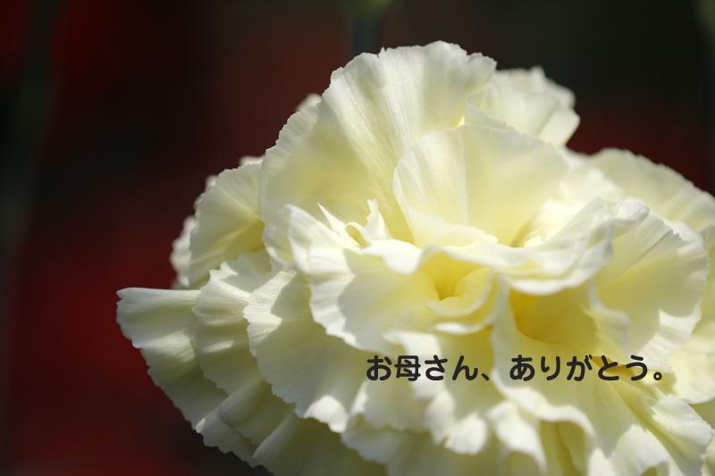 c0180290_12155064.jpg
