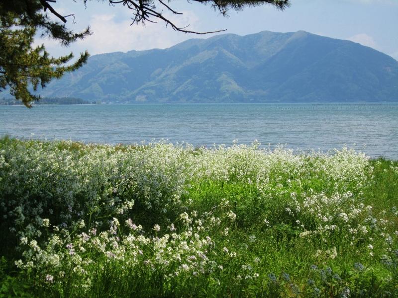琵琶湖と長浜城_b0083801_16382031.jpg
