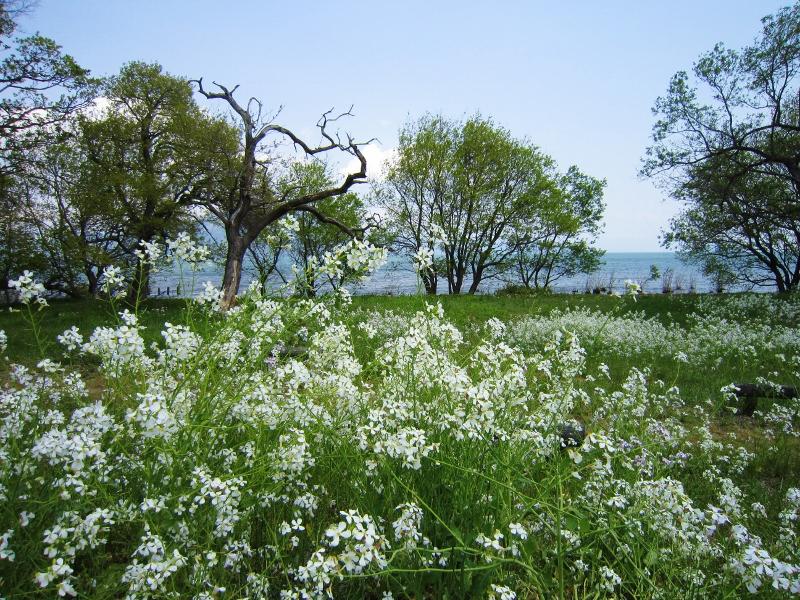 琵琶湖と長浜城_b0083801_1641354.jpg