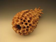 12日から、Wood Sculpture_c0218903_21311491.jpg