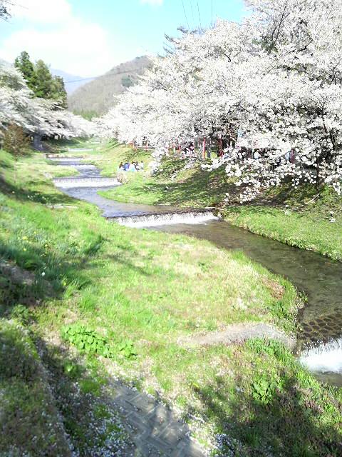桜を見に。_d0180005_18103355.jpg