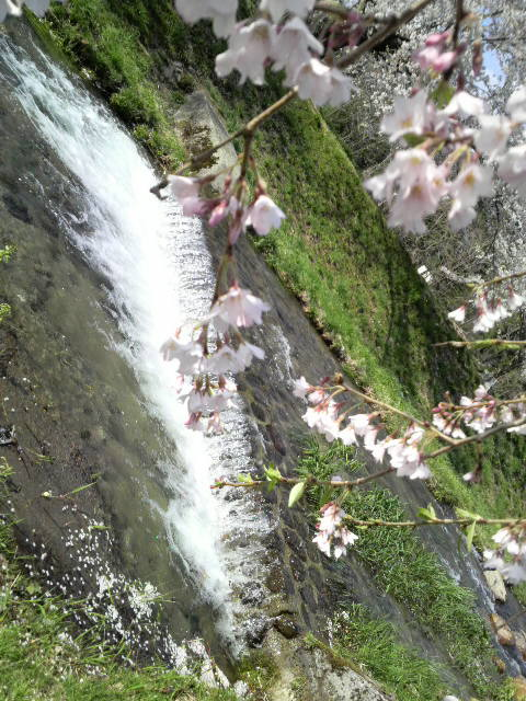 桜を見に。_d0180005_18111131.jpg