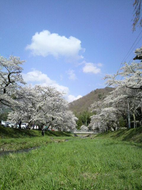 桜を見に。_d0180005_18131576.jpg
