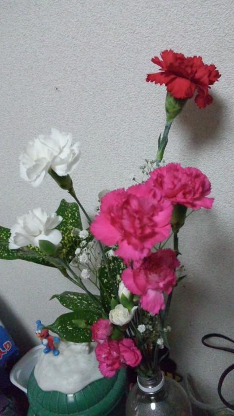 母の日_b0018217_9594665.jpg
