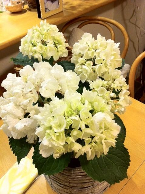 白い紫陽花ピンクの紫陽花_c0193017_20473553.jpg