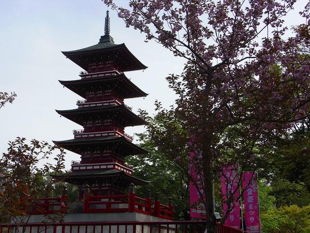 倶梨伽羅八重桜祭り_c0194417_14291064.jpg
