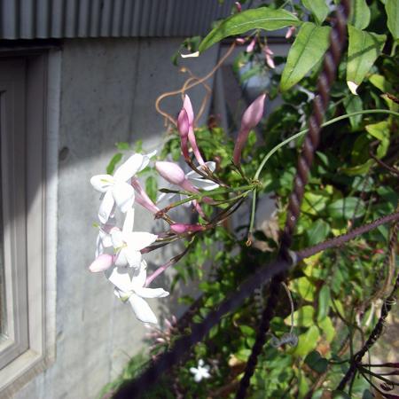 咲き始めた_b0038919_10151783.jpg