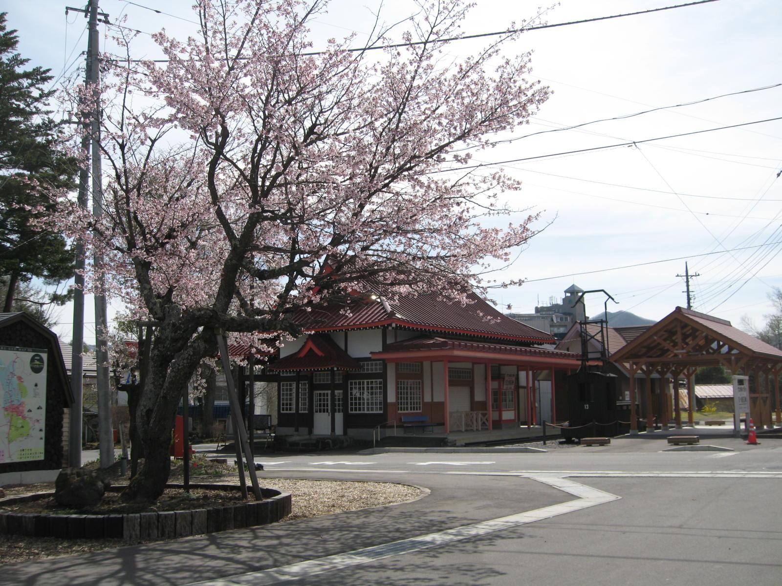 桜が咲いた!_f0146620_23371951.jpg