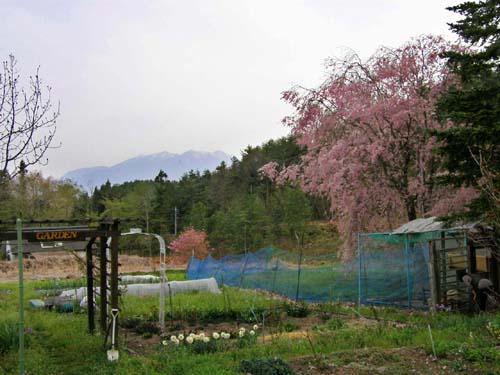 春爛漫のしんふぉにい_d0127634_131362.jpg
