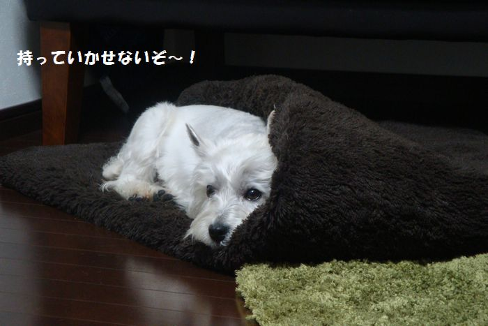 b0214647_12491690.jpg