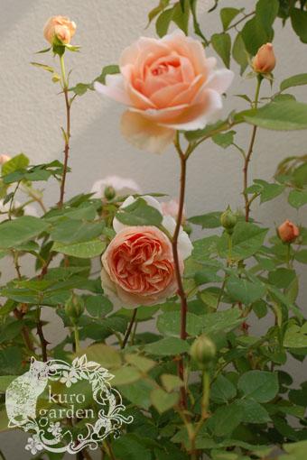 開花ラッシュ_e0119151_11565673.jpg