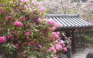 奈良に行ってきました。後編_e0131560_19195848.jpg