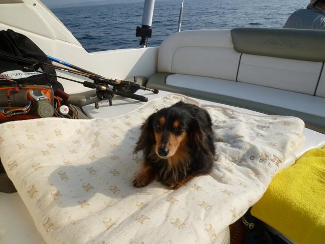 2011 5月 GW 海で遊ぶ~ 其の五 釣り三昧_c0134862_2532460.jpg