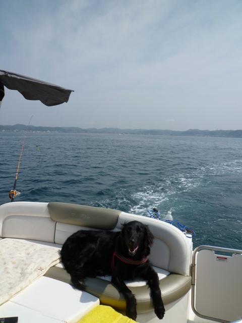 2011 5月 GW 海で遊ぶ~ 其の五 釣り三昧_c0134862_2555072.jpg