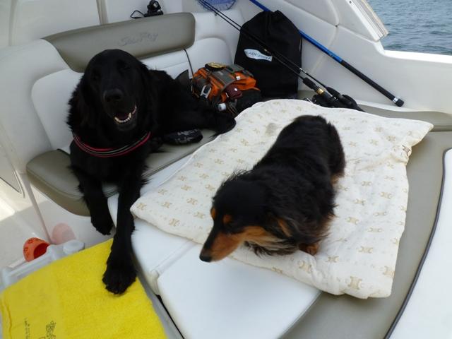 2011 5月 GW 海で遊ぶ~ 其の五 釣り三昧_c0134862_2564084.jpg