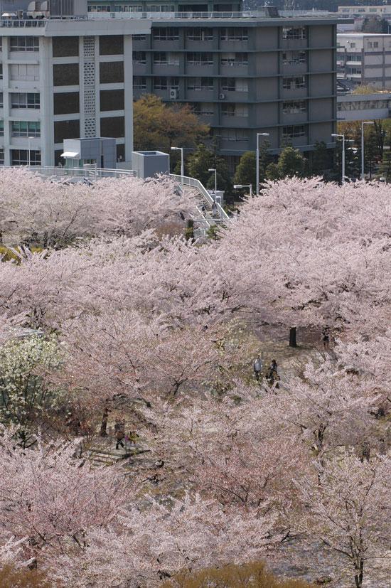 2011桜散歩 424-27 また来年_e0082981_22533993.jpg