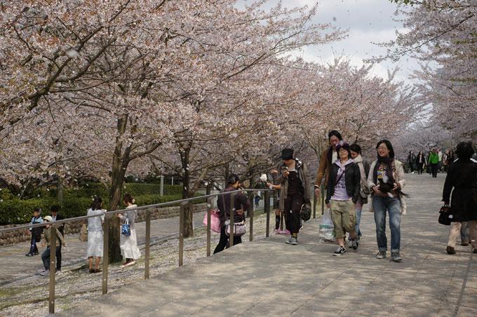 2011桜散歩 424-27 また来年_e0082981_2254352.jpg