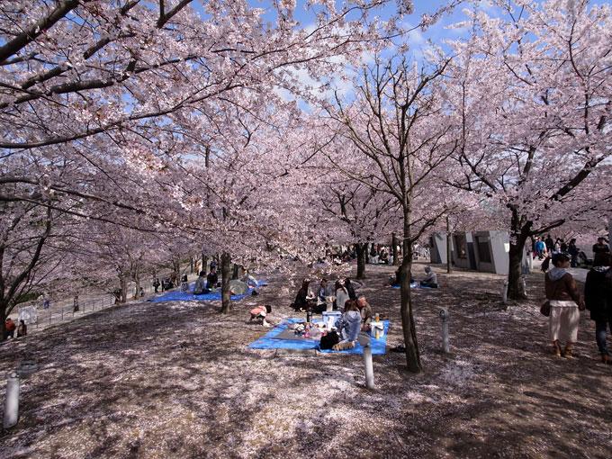 2011桜散歩 424-27 また来年_e0082981_22545737.jpg