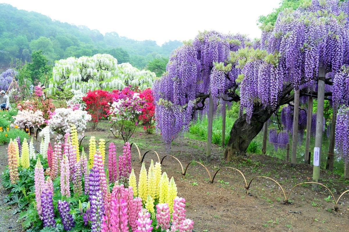 for O jardin des beautes