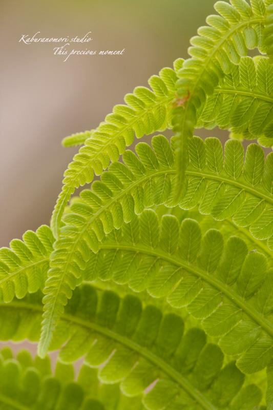 森に、日々緑が増してます_c0137403_19174395.jpg