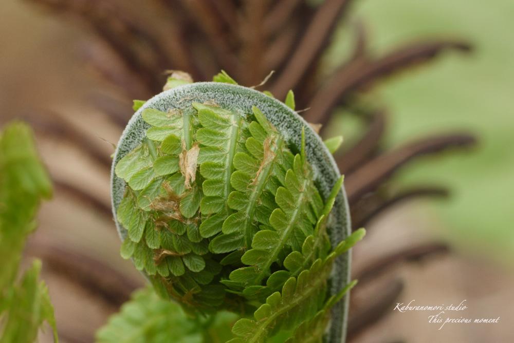 森に、日々緑が増してます_c0137403_19253481.jpg