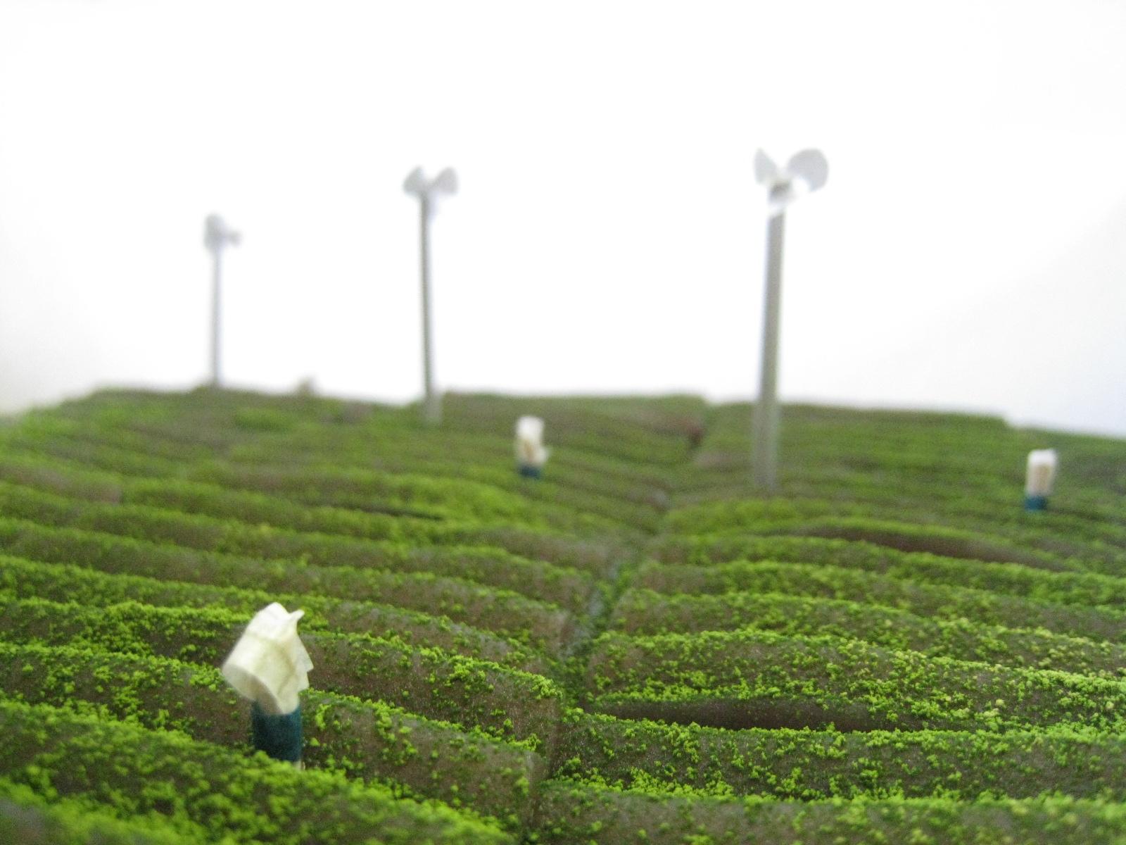 茶畑!!_b0220318_6274798.jpg