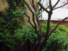 2011年5月のうちの庭_a0155362_1630232.jpg