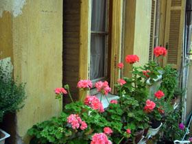 2011年5月のうちの庭_a0155362_16365583.jpg