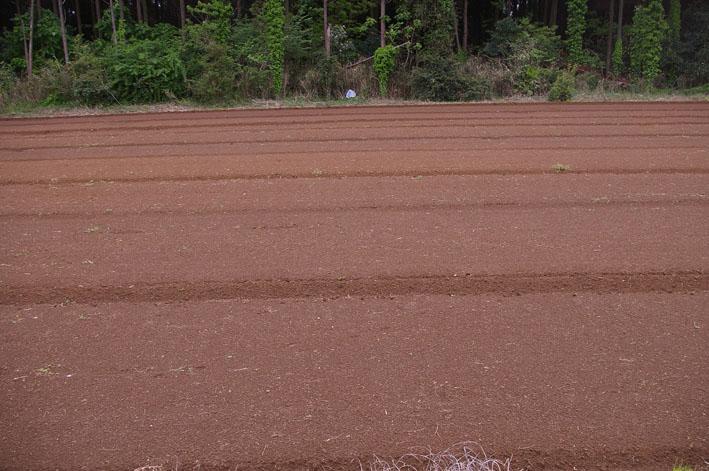 東大社宮司さんからいただいたネギの苗を植え付け(5・9)_c0014967_181144.jpg