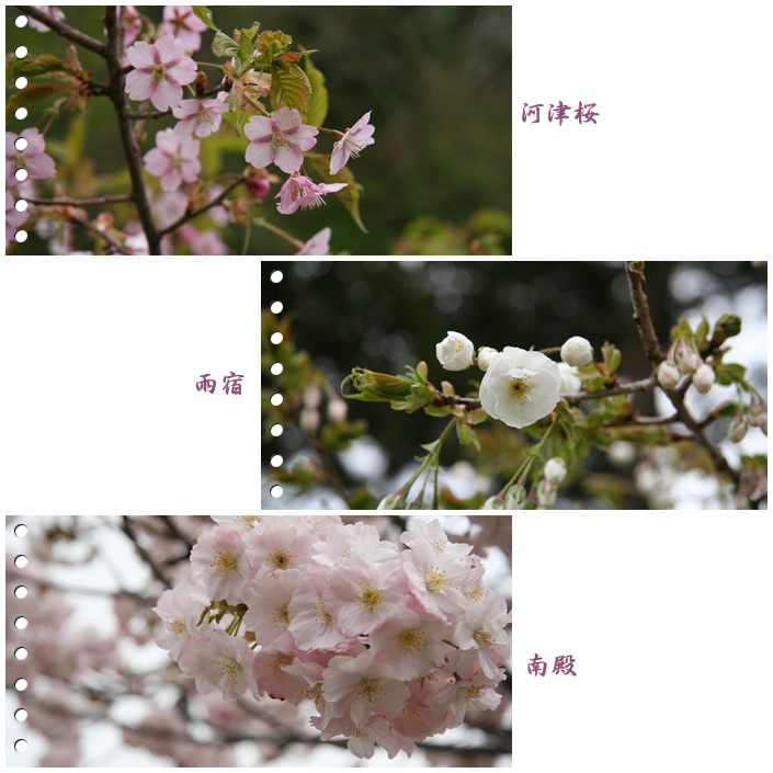 f0146493_22431020.jpg