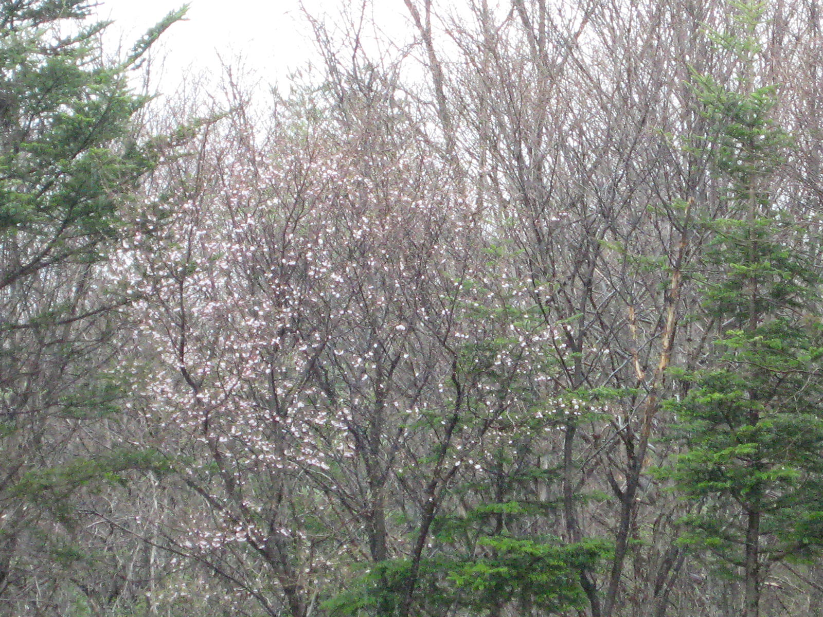 山桜の季節_f0146620_22103884.jpg