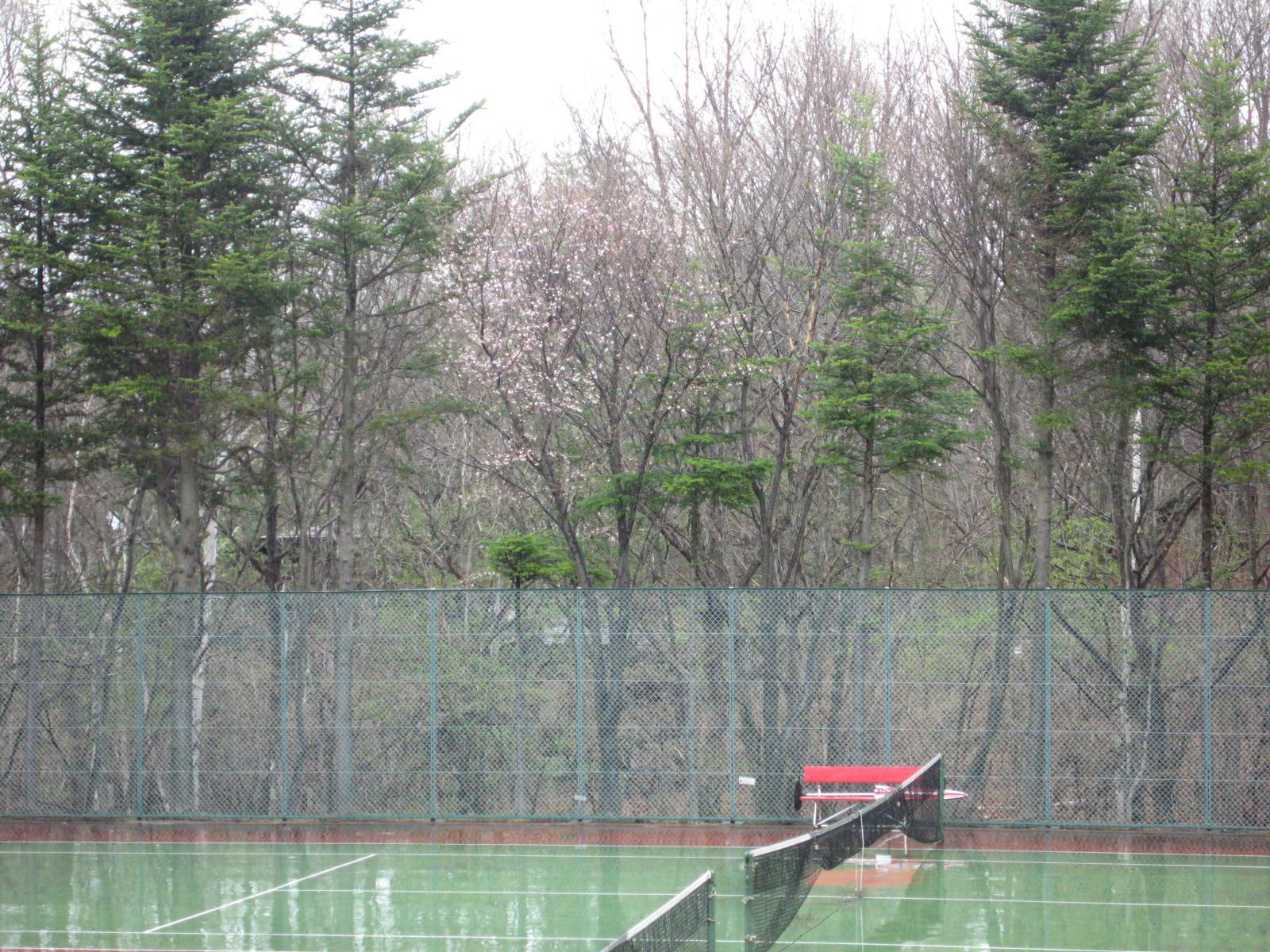山桜の季節_f0146620_2291497.jpg