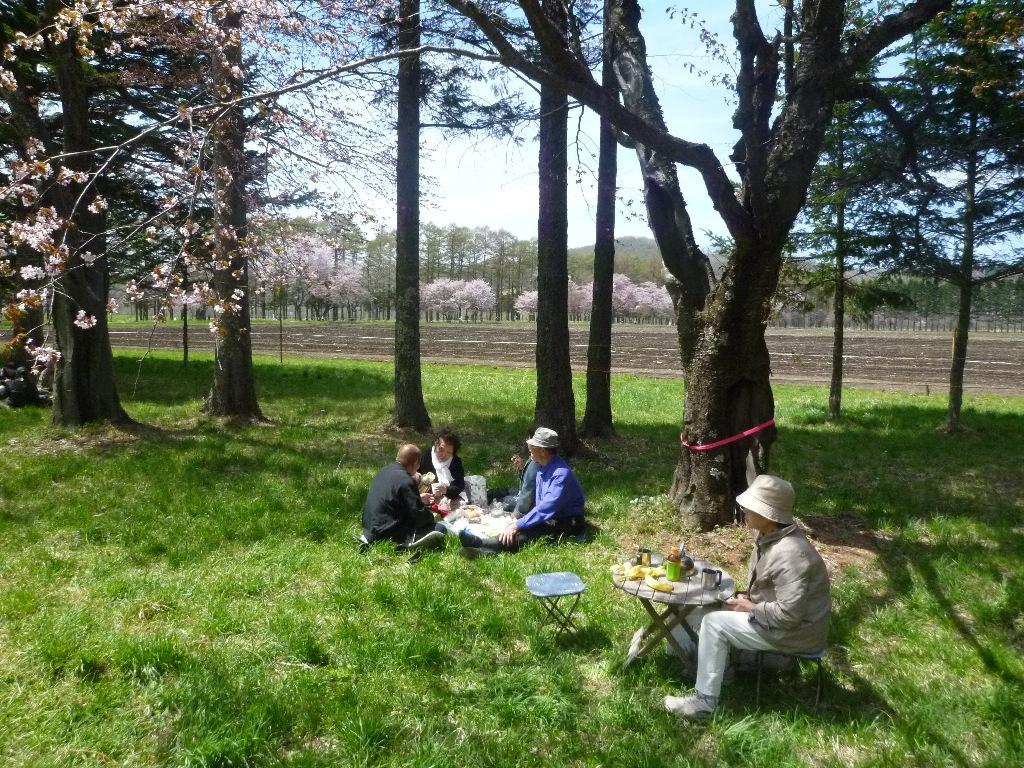 1543)①「静内 二十間道路桜並木 五分咲き 2011年5月11日(水) 晴」_f0126829_2338167.jpg