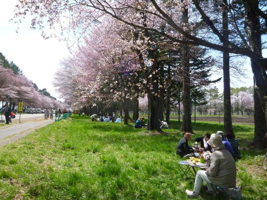1543)①「静内 二十間道路桜並木 五分咲き 2011年5月11日(水) 晴」_f0126829_23383681.jpg