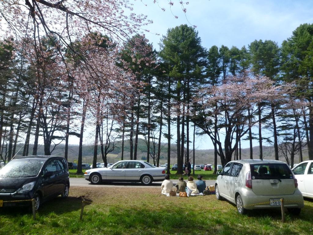 1543)①「静内 二十間道路桜並木 五分咲き 2011年5月11日(水) 晴」_f0126829_23493559.jpg