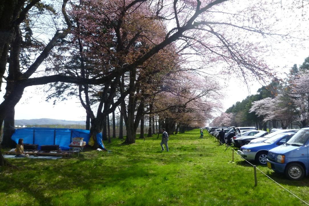 1543)①「静内 二十間道路桜並木 五分咲き 2011年5月11日(水) 晴」_f0126829_23521453.jpg