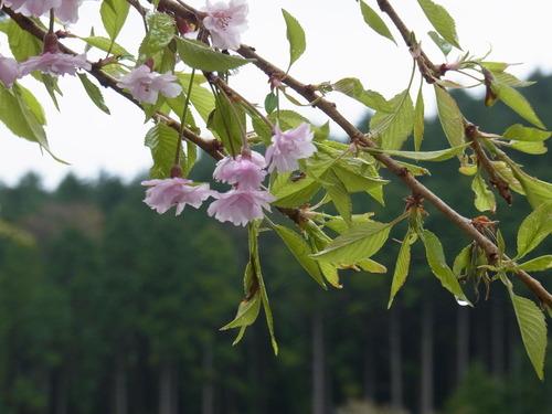箱根の山は天下の嶮!_b0159631_121933.jpg