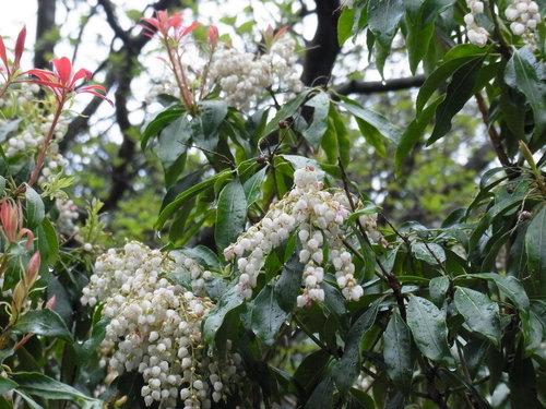 箱根の山は天下の嶮!_b0159631_132576.jpg